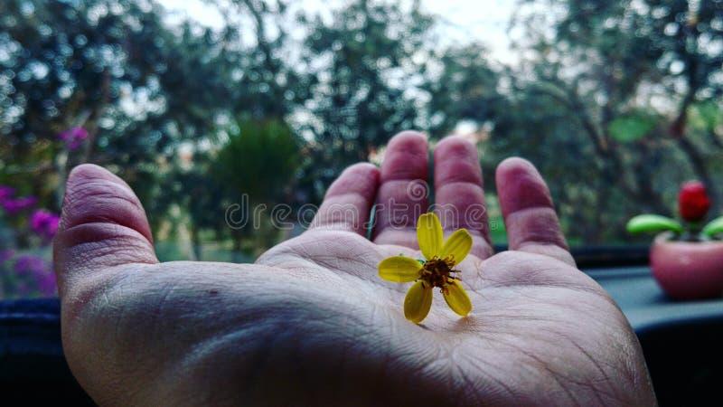Цветок руки стоковые изображения