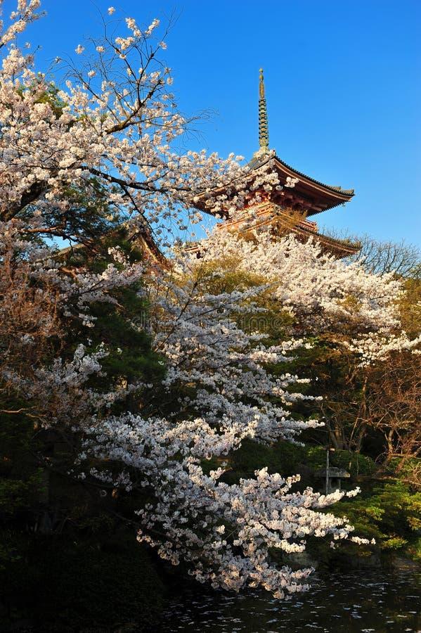 Цветок Сакуры вишневых цветов во время времени весны с виском в Японии стоковые изображения
