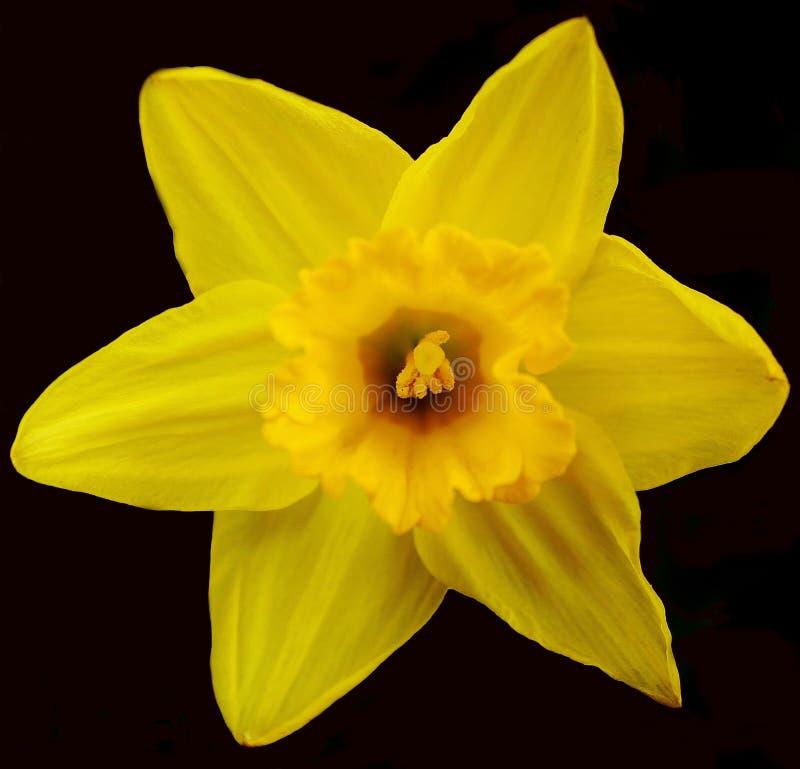 Цветок сада стоковые фото