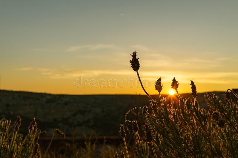 Цветок селективного фокуса с лугом восхода солнца на заднем плане стоковое изображение rf