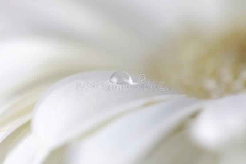 Цветок стоцвета с падениями воды стоковое изображение rf