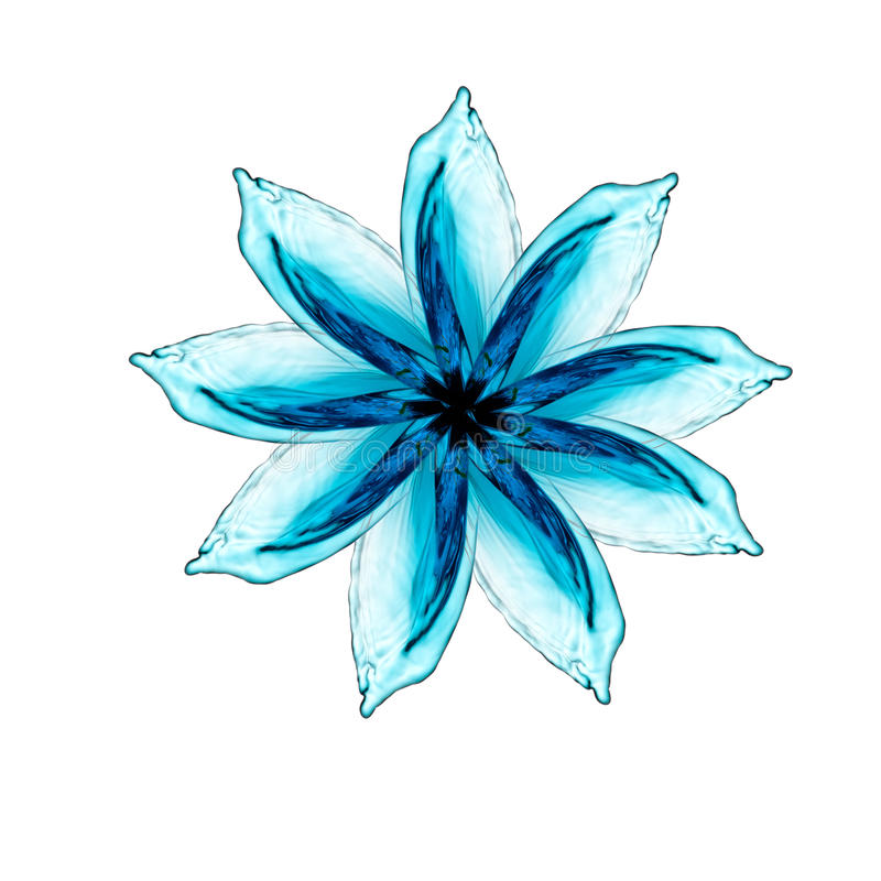 Цветок сделанный выплеска воды стоковое изображение