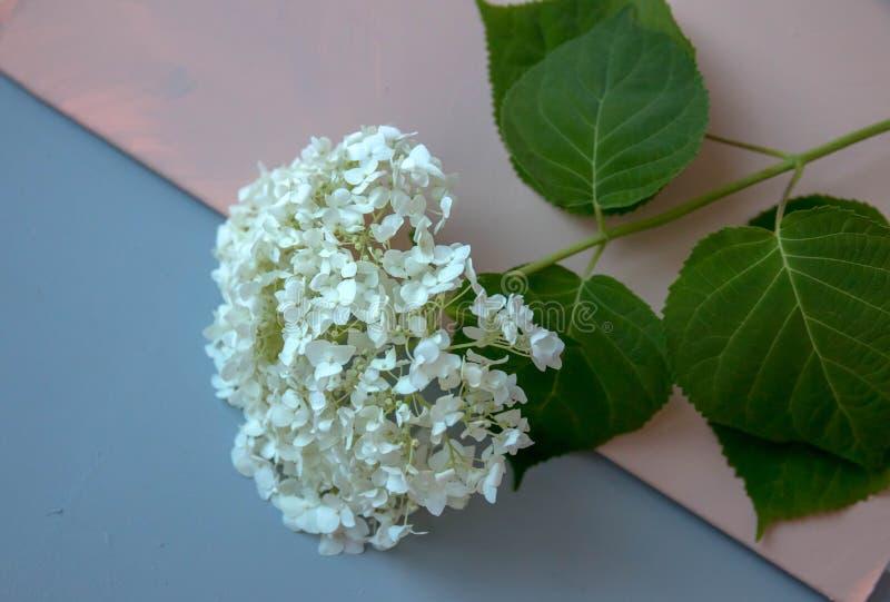 Цветок с зелеными листьями, на пестротканой предпосылке стоковое фото