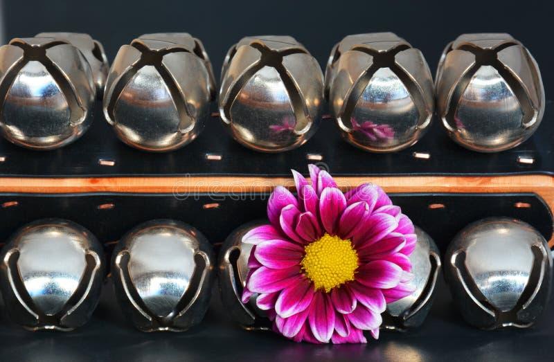 цветок с колоколами саней стоковые фото