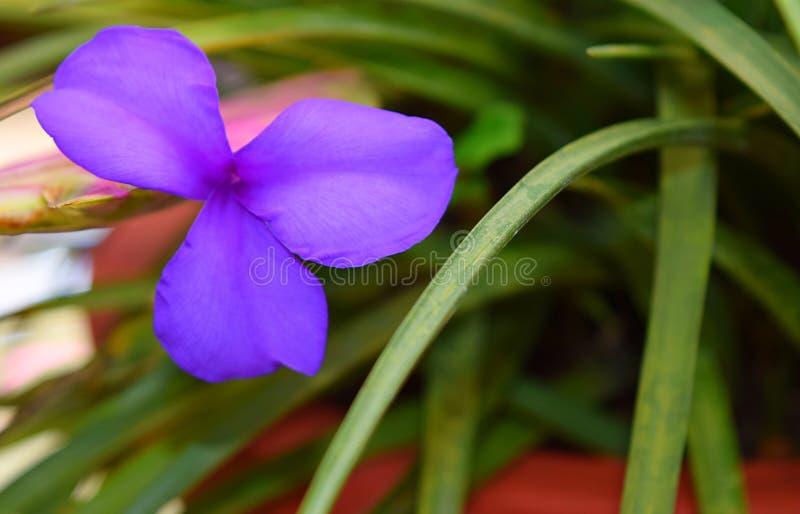 Цветы из трех лепестков фото