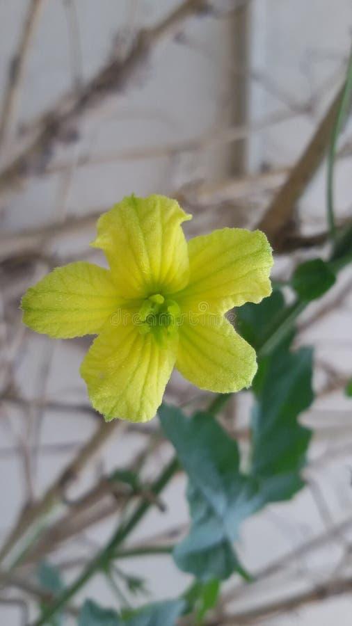 Цветок с милыми взглядами стоковая фотография rf