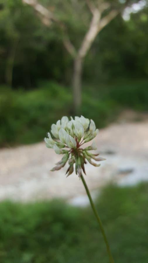 Цветок с предпосылкой кровати заводи стоковое фото rf