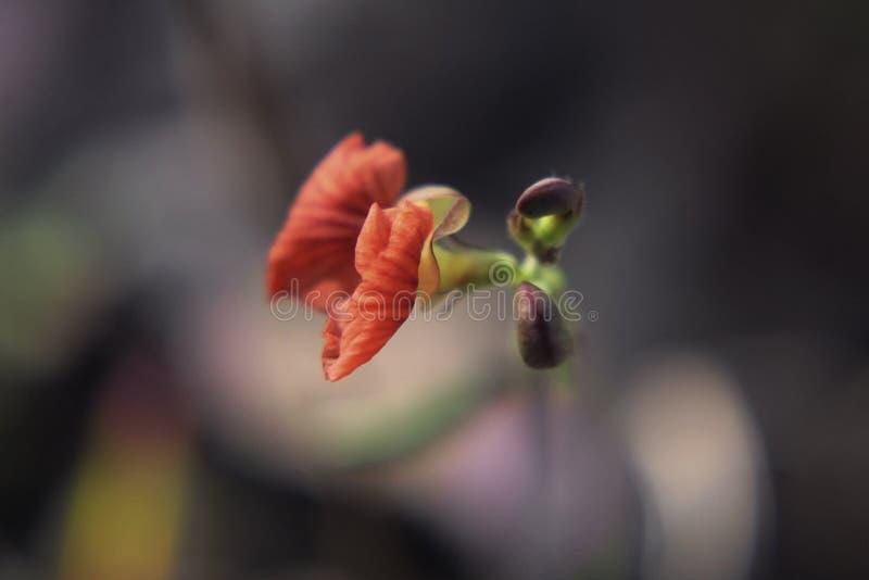 Цветок с сексуальной красотой стоковые изображения rf