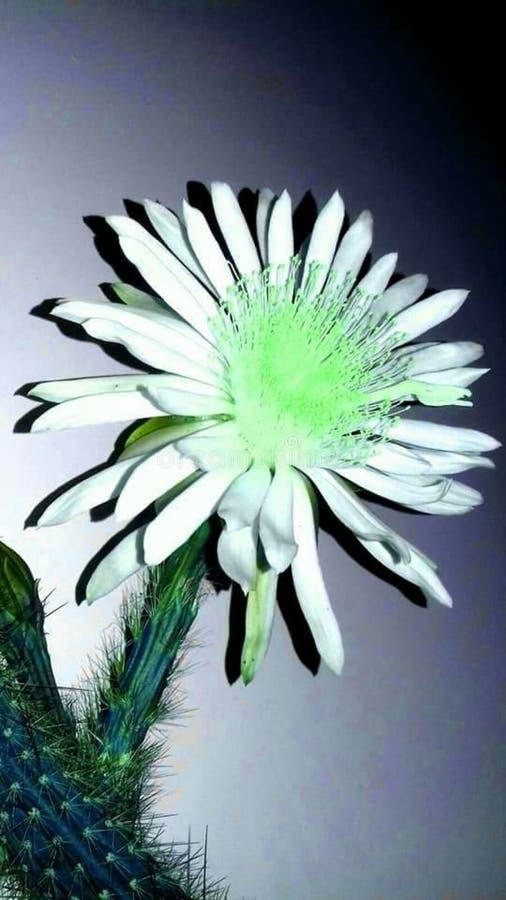 Цветок с цветом и различными сараями стоковые изображения rf