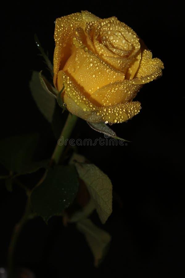 Цветок с waterdrops стоковые фотографии rf