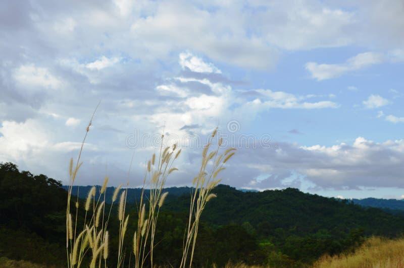 Цветок травы на холме на горе Khao Lon в Таиланде стоковые фотографии rf