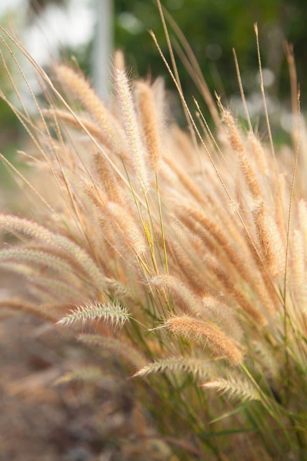 Цветок травы стоковая фотография