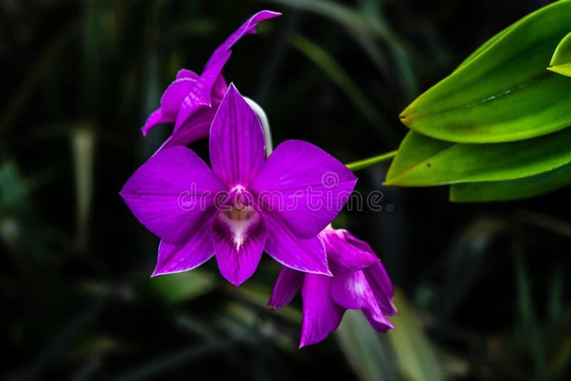 цветок тропический стоковое фото rf