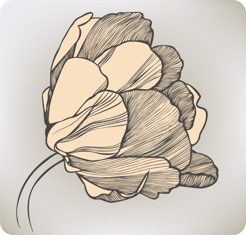 Цветок тюльпана, рук-чертеж. Иллюстрация вектора. иллюстрация штока