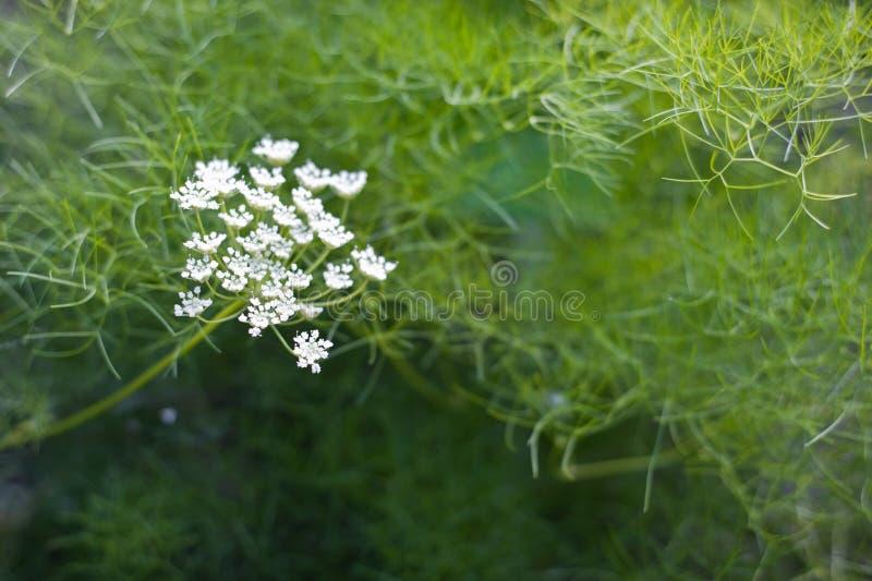 Цветок луга лета стоковое изображение