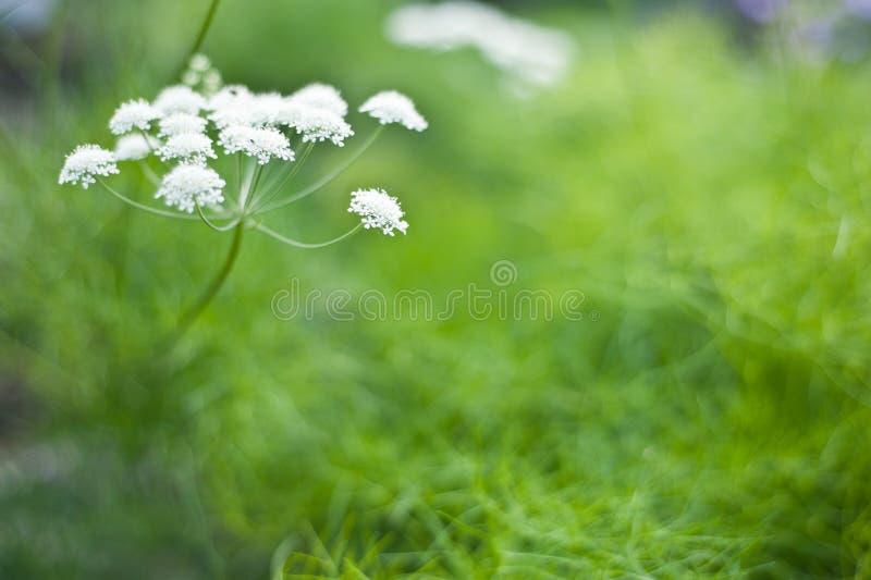 Цветок луга лета стоковое изображение rf