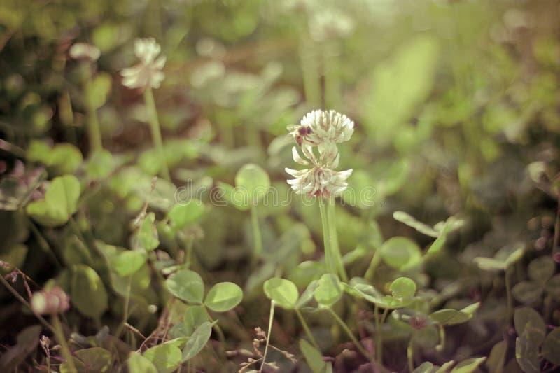 Цветок луга лета стоковые изображения