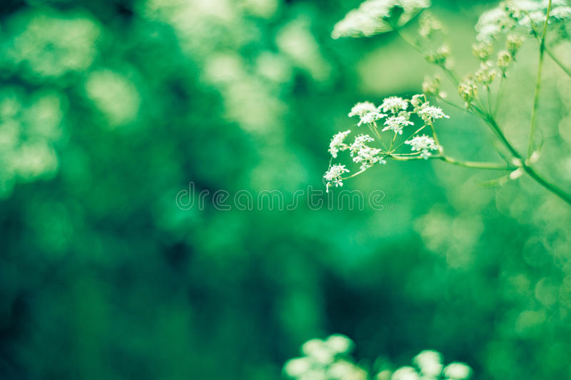 Цветок луга лета стоковое фото rf