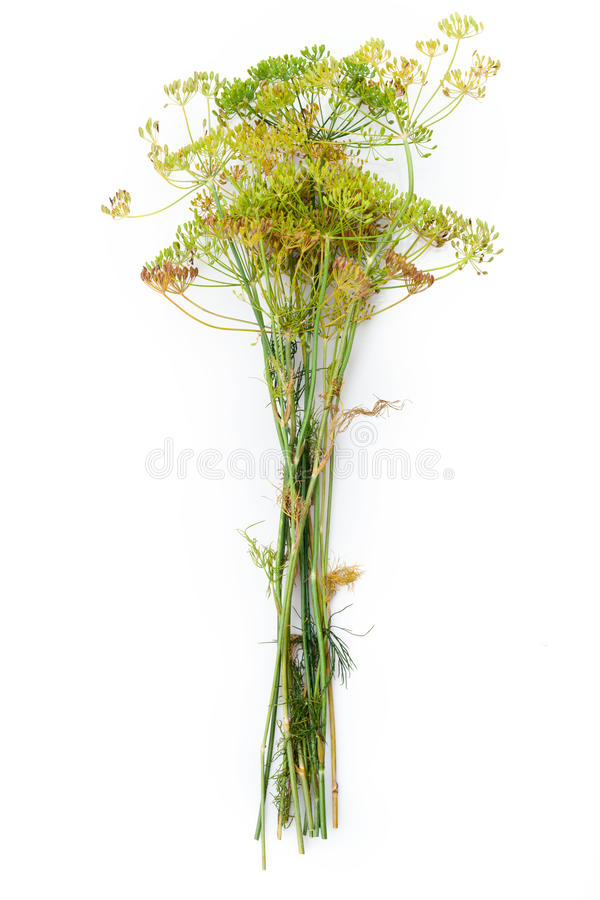 Цветок укропа стоковые фото