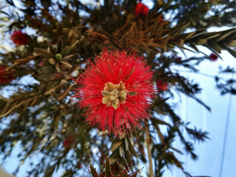 цветок уникально стоковое изображение