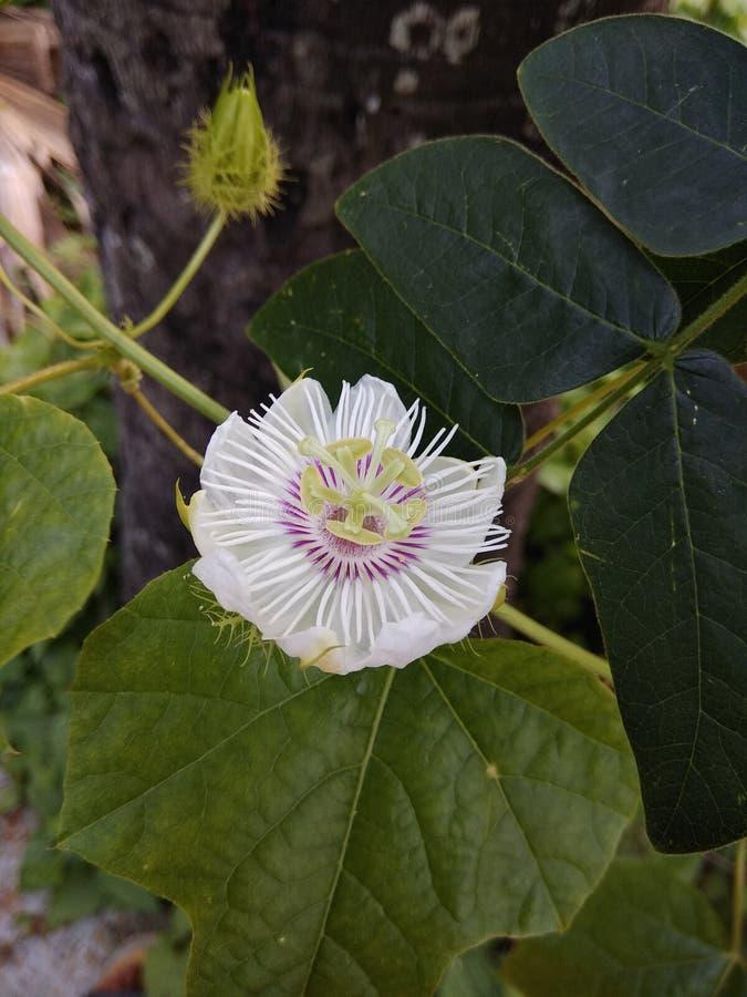 цветок уникально стоковое изображение rf