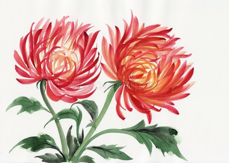 Цветок хризантемы иллюстрация вектора