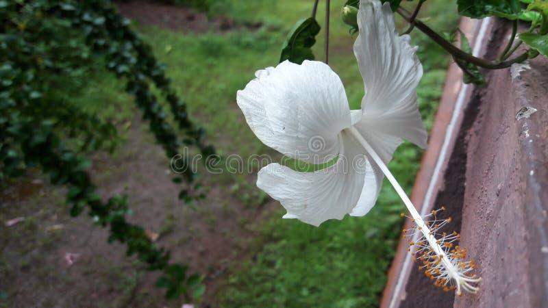 Цветок цветка стоковая фотография rf