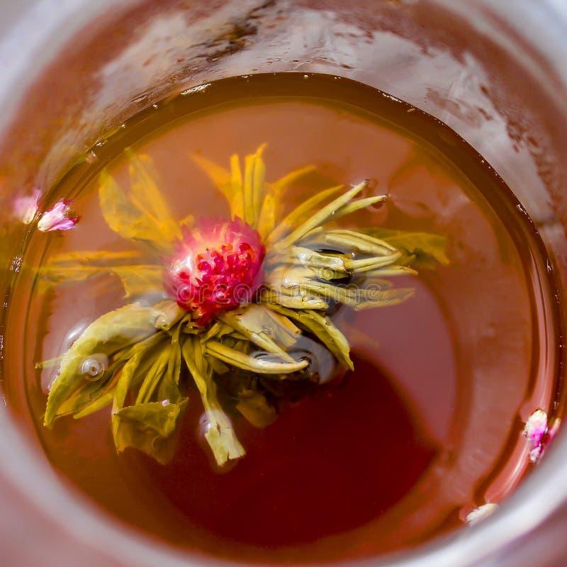 Цветок чая стоковые фотографии rf