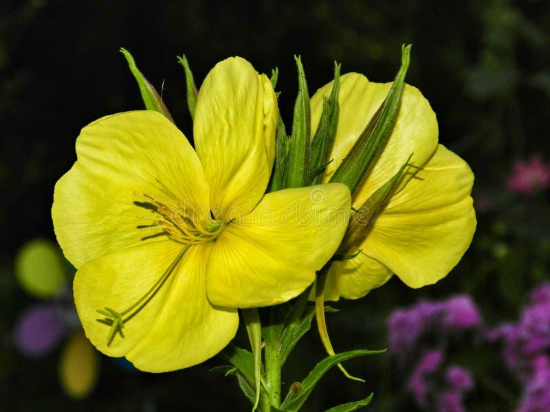 цветок чудесный стоковое фото rf