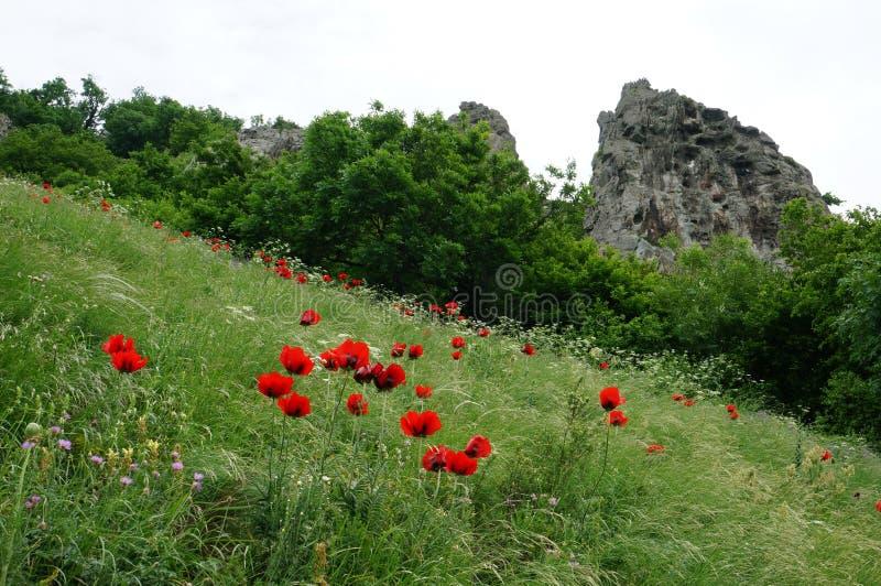 Цветок шарлаха стоковое изображение