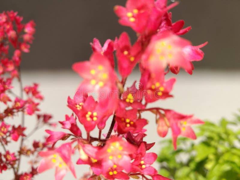 Цветок элегантности стоковое фото rf