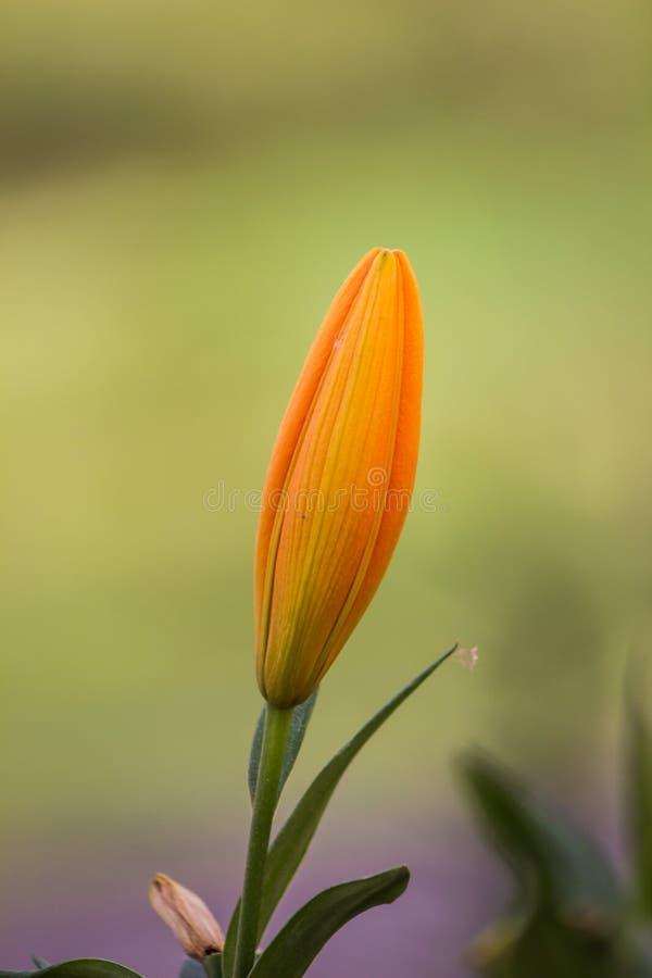 Цветок для вашего стоковое изображение rf