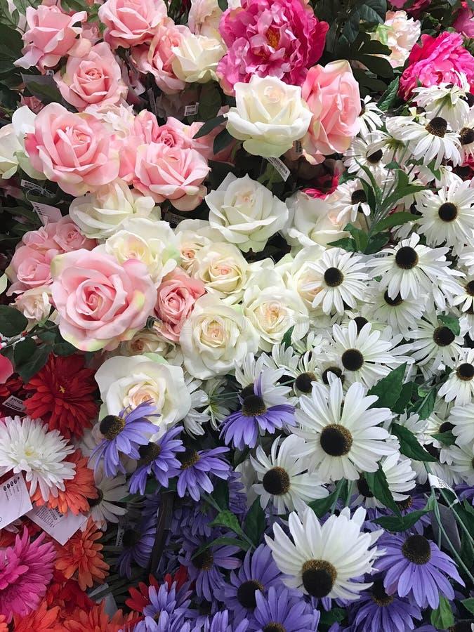 Цветок для девушки на день валентинки стоковые фото