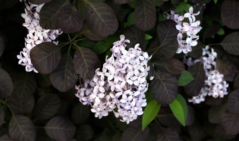 цветок 003 стоковая фотография