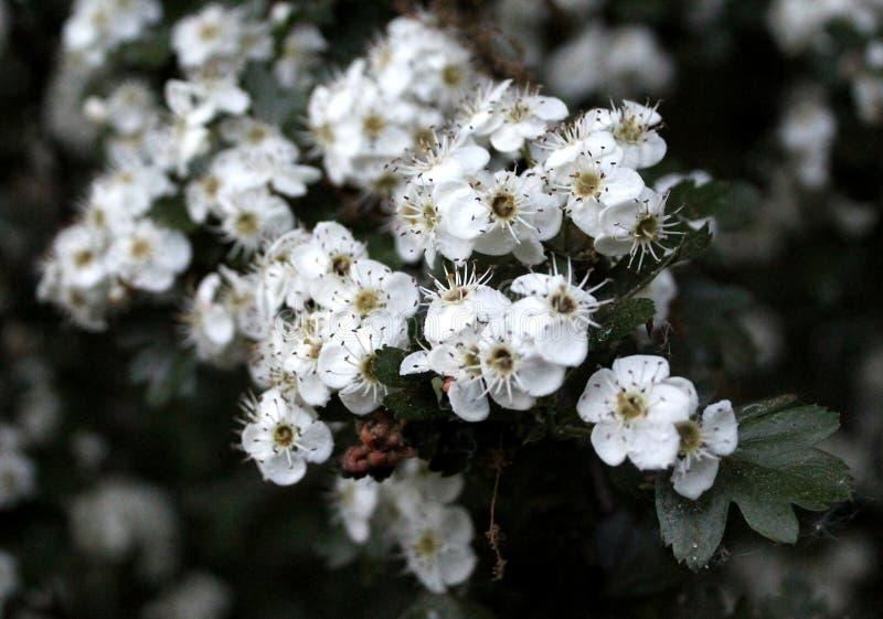 Цветок 004 стоковые фотографии rf