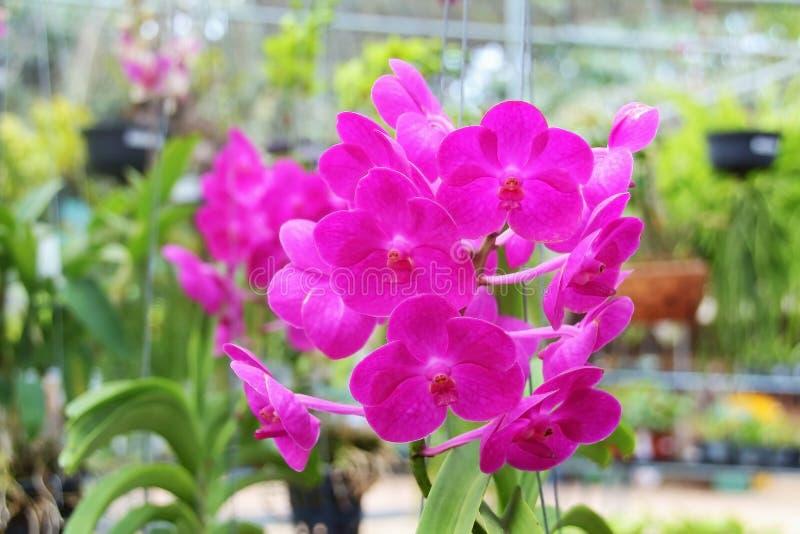 Download Цветок стоковое фото. изображение насчитывающей флористическо - 37927964