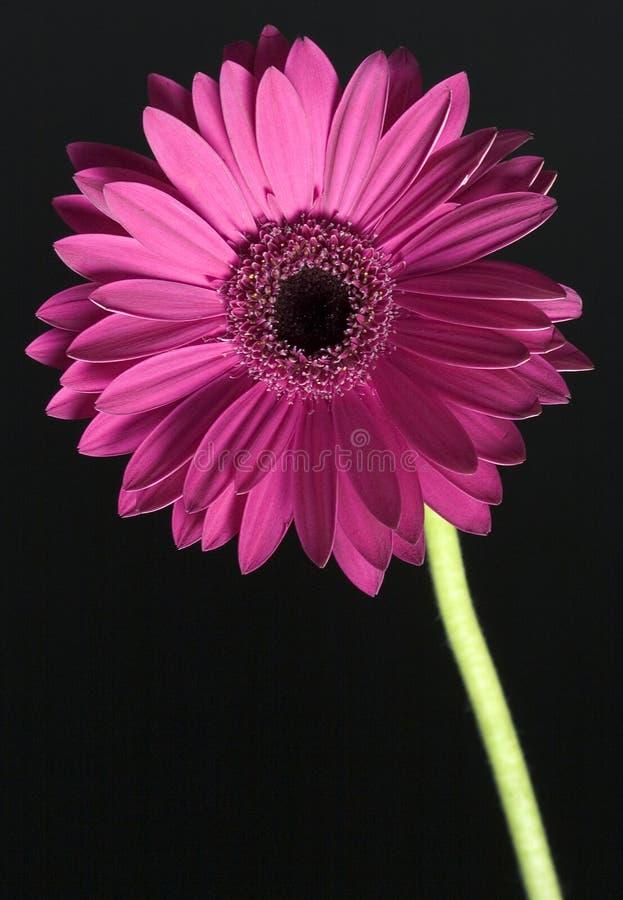 Download цветок стоковое изображение. изображение насчитывающей черный - 485695