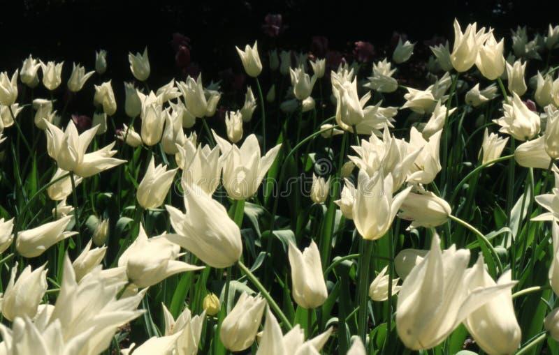 Download цветок стоковое фото. изображение насчитывающей промахов - 490320