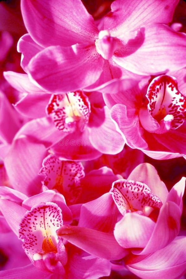 Download цветок стоковое изображение. изображение насчитывающей вырастите - 490375