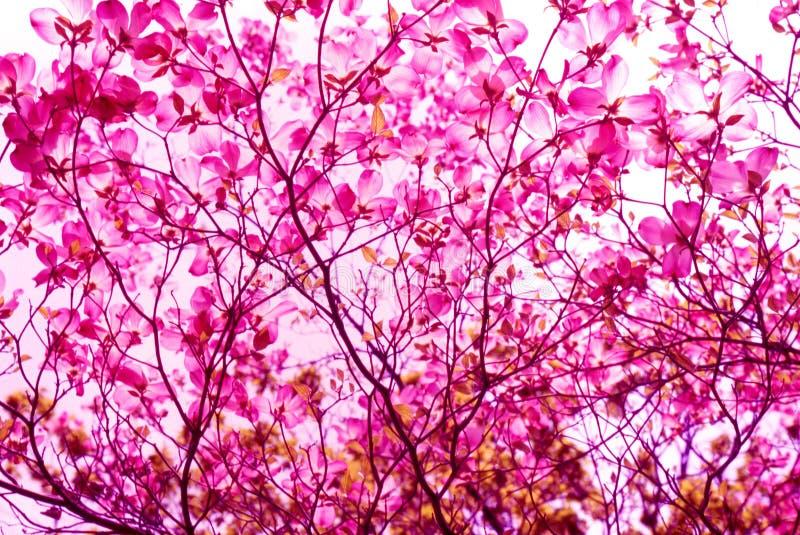 Download цветок стоковое изображение. изображение насчитывающей цветасто - 490377
