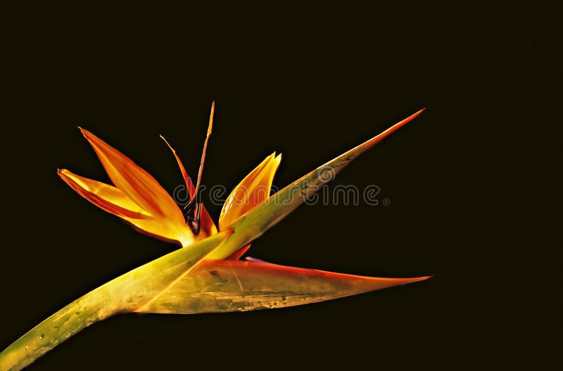 Download цветок стоковое изображение. изображение насчитывающей present - 493011