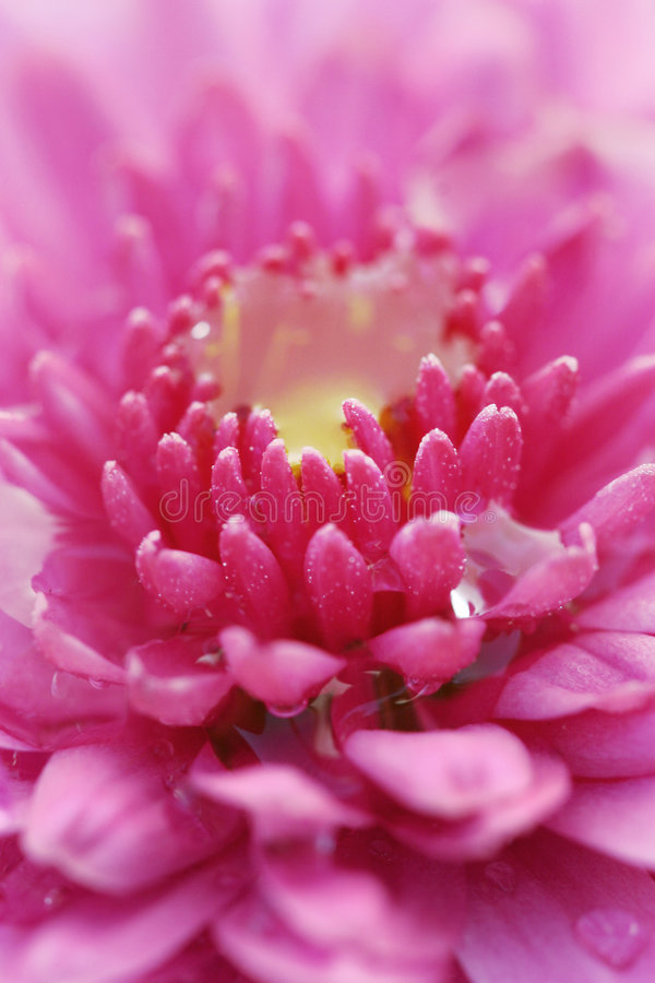 цветок 5 стоковое изображение