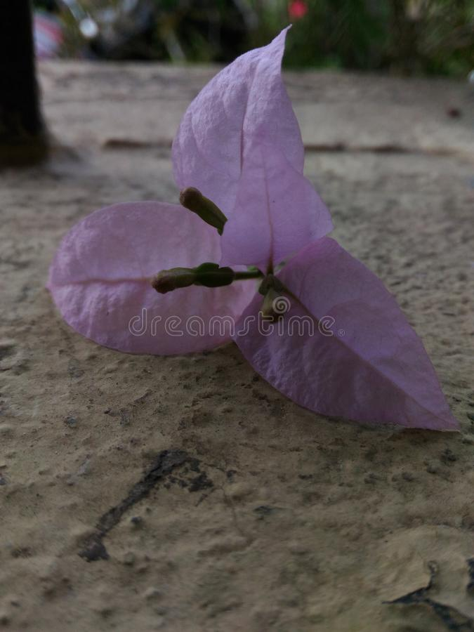 Цветок стоковое фото rf