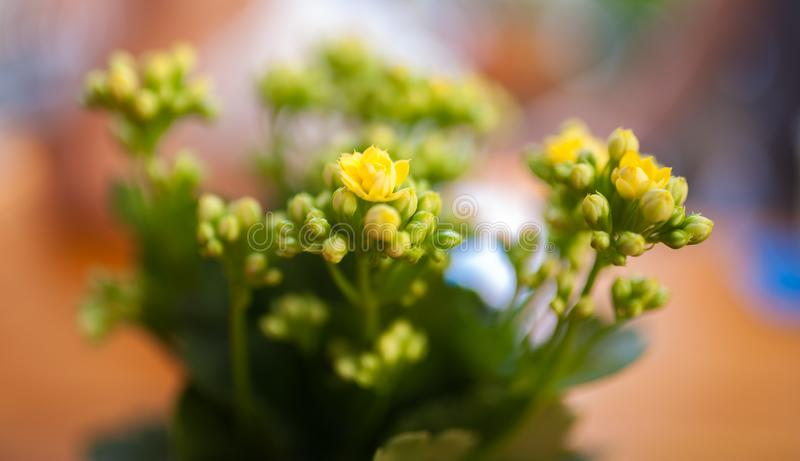 Цветок стоковое фото