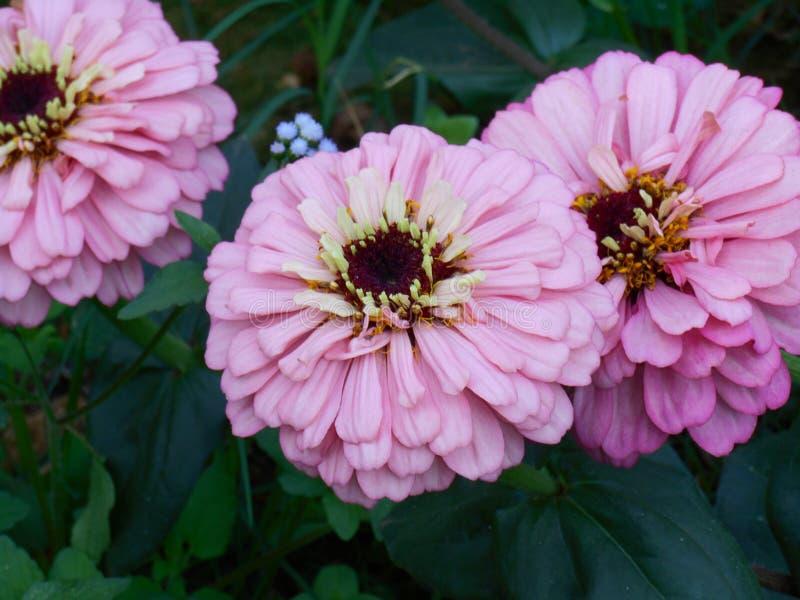 Цветок 08 стоковое фото