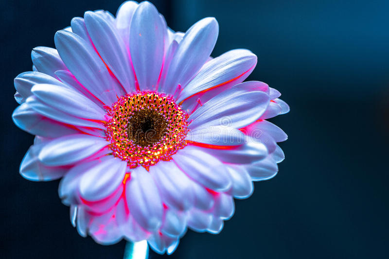 Цветок ART Цветок плавая на воду стоковое фото rf