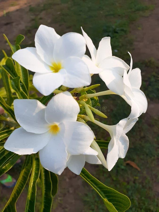 Цветок Beutyfull стоковая фотография