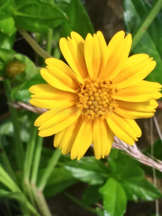 Цветок Budiful стоковые изображения