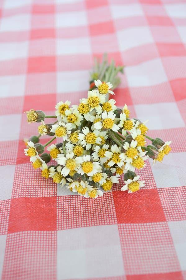 Цветок Coatbuttons на скатерти стоковая фотография