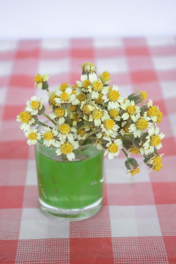 Цветок Coatbuttons на скатерти стоковое фото